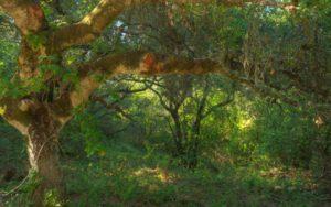 edgewood-park-edgewood-trail-007